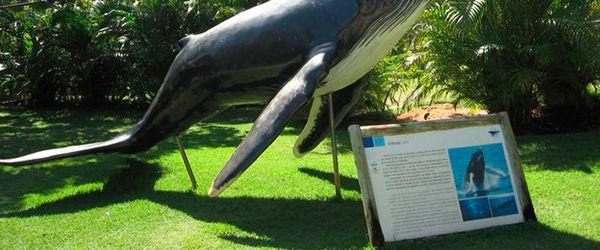 instituto-baleia-jubarte-praia-forte