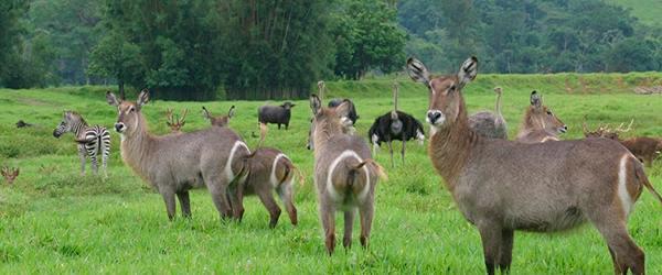 Portobello Resort & Safari - Resort com safari em Angra dos Reis