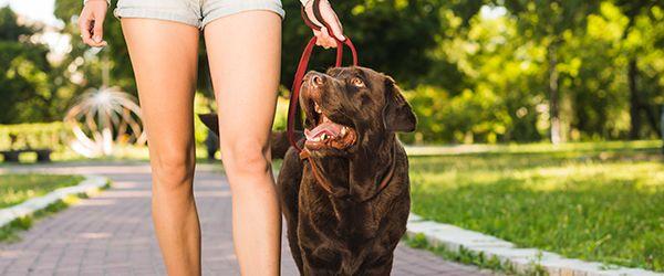 Viajar com animais de estimação: resorts pet friendly