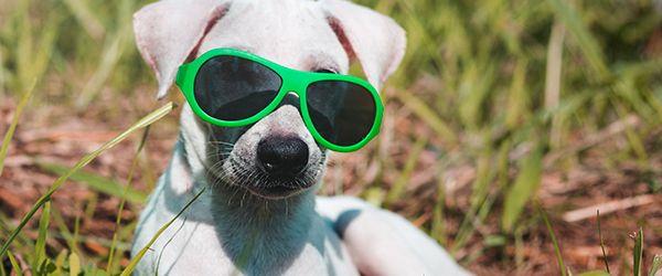 Viajar com animais de estimação: dicas de roteiros