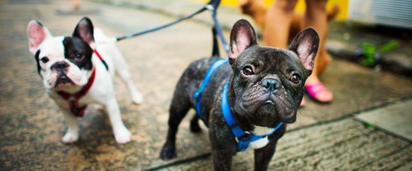 Viajar com animais de estimação: antes de viajar
