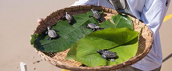 Trilhas ecologicas ecoturismo Itacaré