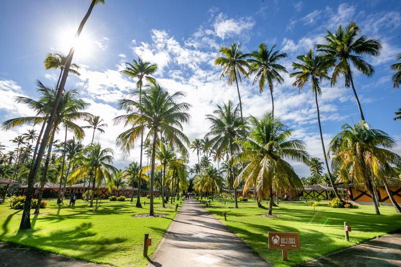 trilhas que levam aos coqueirais passando pelo resort